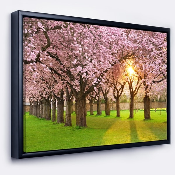 Designart 'Fascinating Springtime Cherry Scenery' Landscape Framed Canvas Art Print