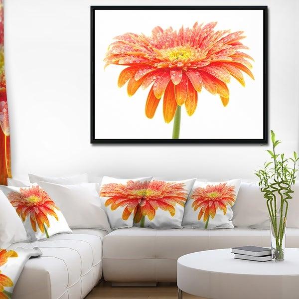 Designart 'Large Orange Gerbera on White' Floral Framed Canvas Art Print