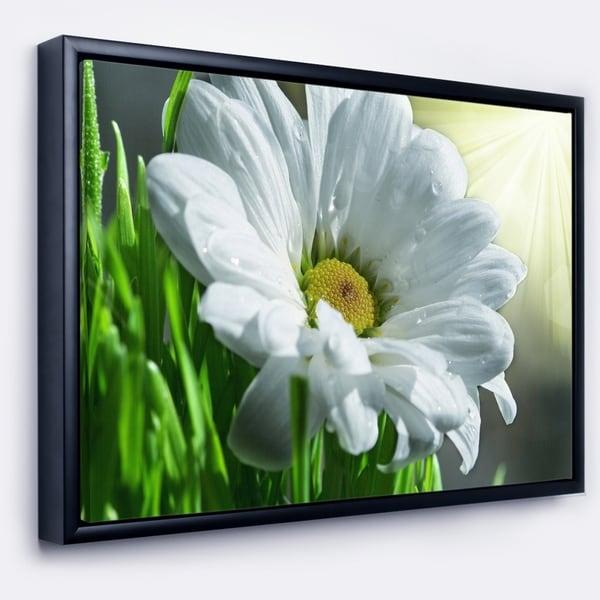 Designart 'Single Beautiful Daisy Flower' Large Flower Framed Canvas Art Print