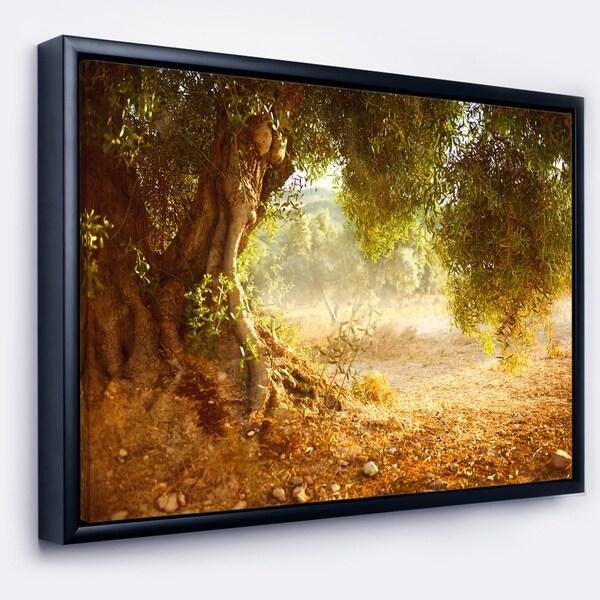 Designart 'Beautiful Old Olive Tree' Large Landscape Framed Canvas Art Print