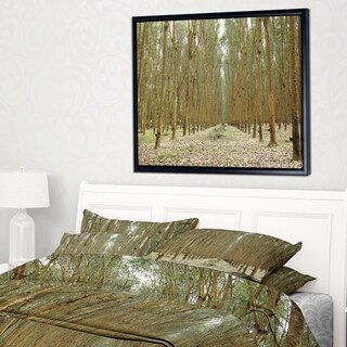 Designart 'Rubber Trees Row in Thailand' Modern Forest Framed Canvas Art