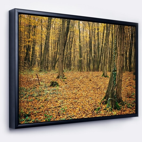 Designart 'Beautiful Autumn Forest in Mountains' Modern Forest Framed Canvas Art