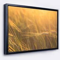 Designart 'Wheat Field Close up at Sunset' Large Landscape Framed Canvas Art
