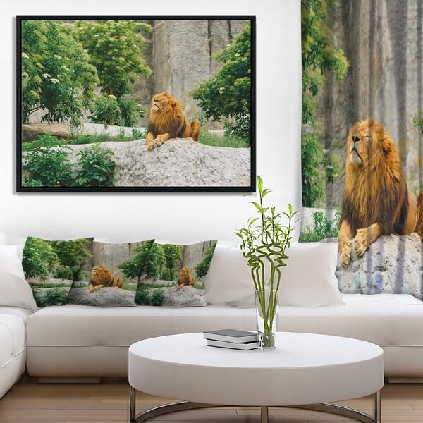 Designart 'Big Lion Lying On Stones in Zoo' Landscape Framed Canvas Art Print