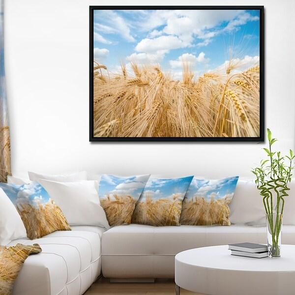 Designart 'Barley Field under Blue Sky' Landscape Framed Canvas Art Print