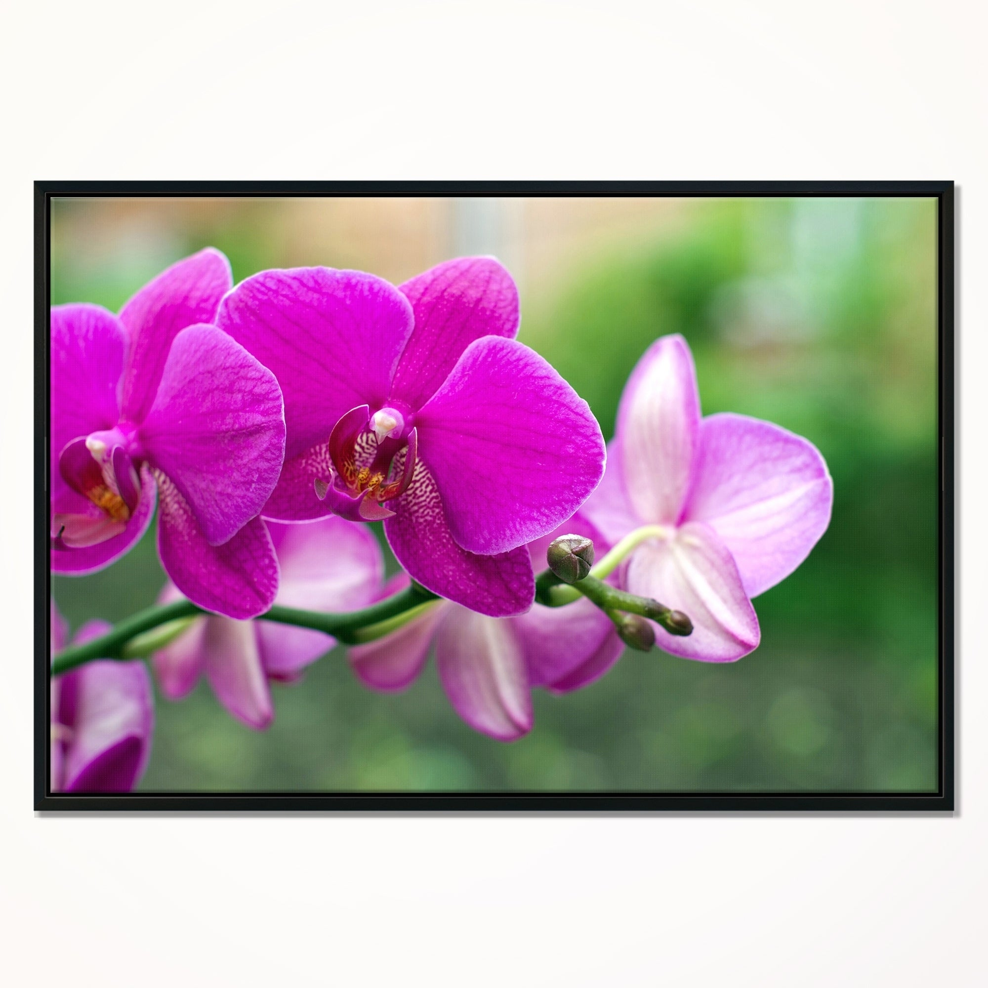 GREEN ORCHID FLOWER CLOSE UP CANVAS PRINT WALL ART READY TO HANG