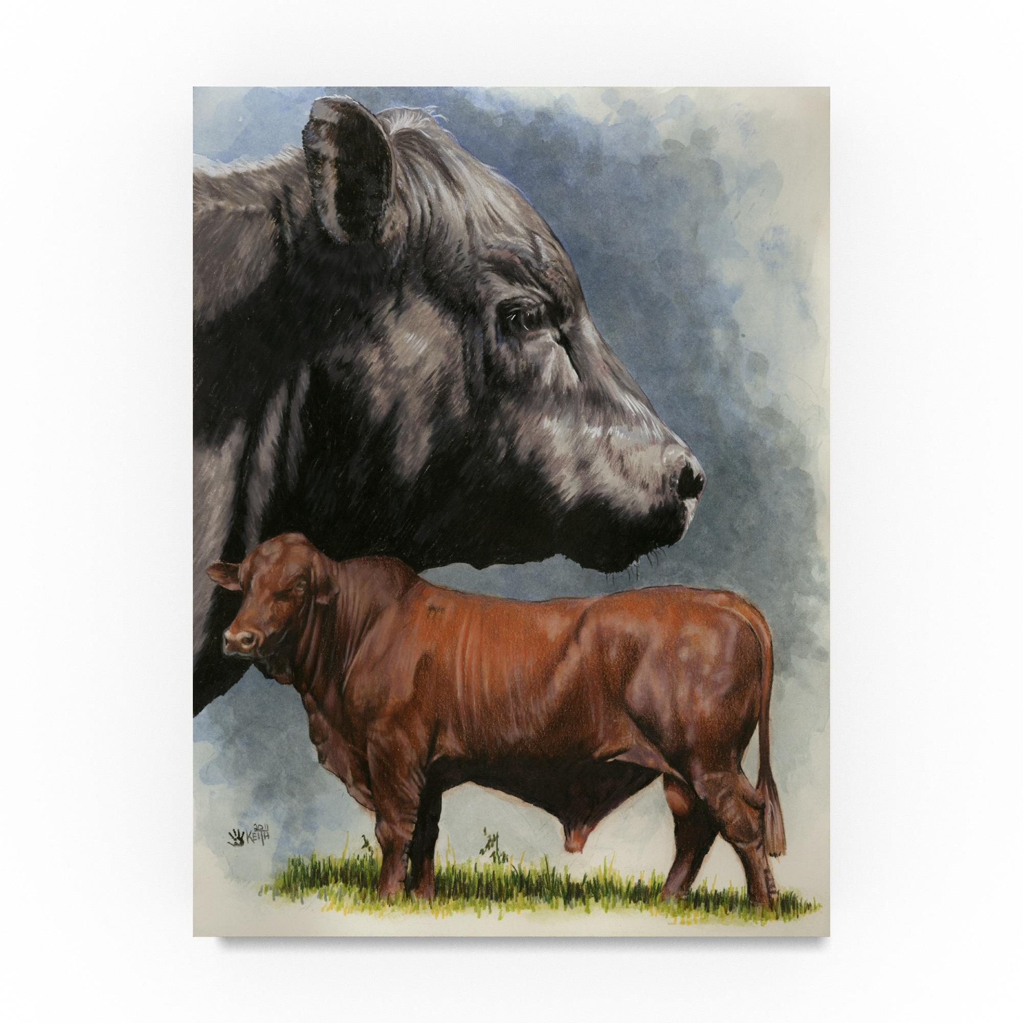 Trademark Barbara Keith 'Angus Cattle' Canvas Art (14x19)