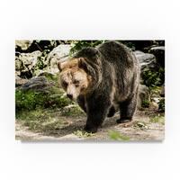 Robert Michaud 'Bear Walking' Canvas Art