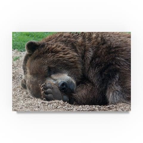 Robert Michaud 'Sleeping Bear' Canvas Art