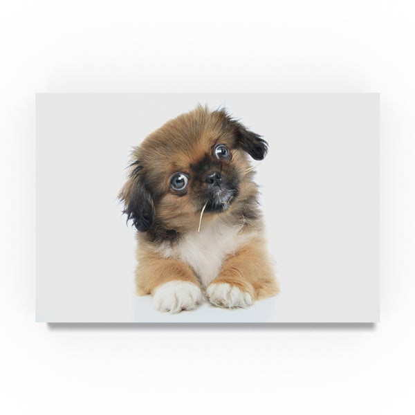 Shop Andrea Mascitti Puppies 'Confused Puppy' Canvas Art - On Sale
