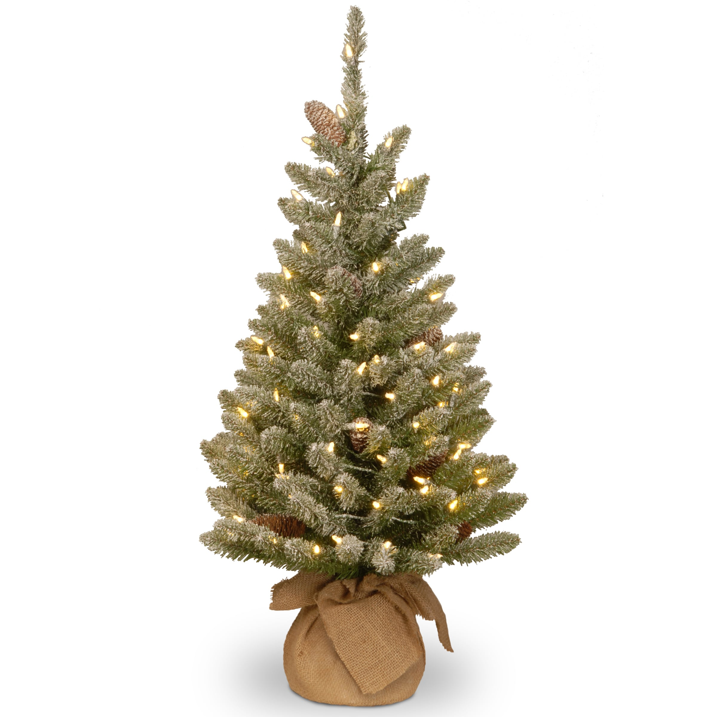 National Tree Snowy Concolor Fir Small Tree in Burlap (As...