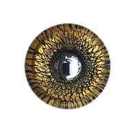 Gold & Black Round Glass Knobs, Chrome Base - Pack of 6
