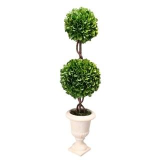 Boxwood Topiary Plant