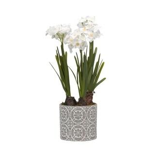 D&W Silks Paperwhite Bulbs in Round Cement Planter