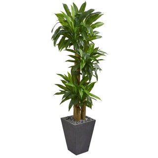 5.5' Cornstalk Dracaena Artificial Plant in Slate Planter (Real Touch)