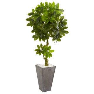 6' Schefflera Artificial Tree in Cement Planter UV Resistant (Indoor/Outdoor)