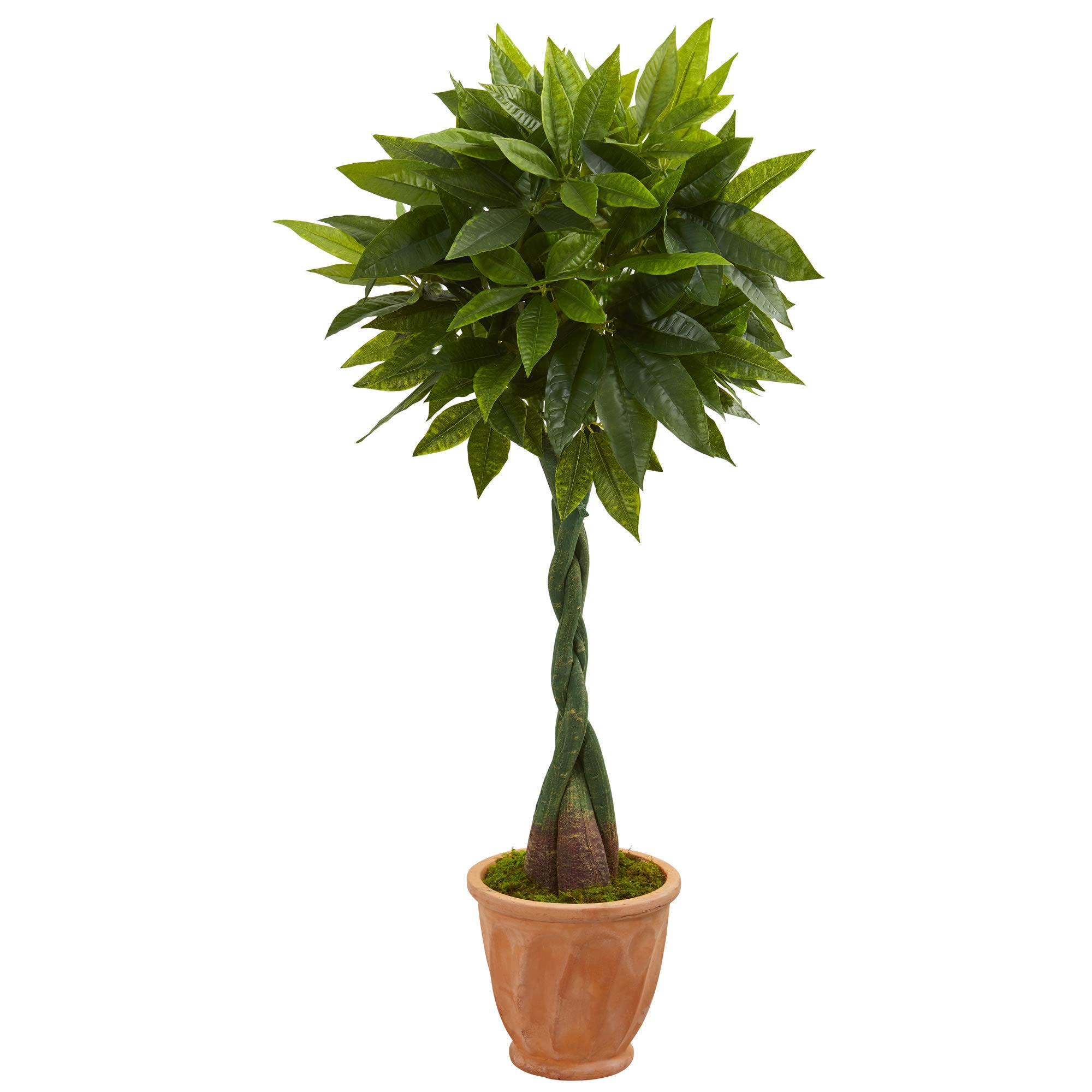 5' Money Artificial Tree in Terracotta Planter (Real Touch) | eBay