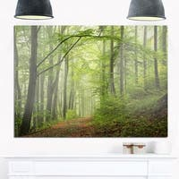 Early Green Fall Forest - Landscape Photo Glossy Metal Wall Art