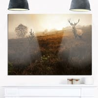 Mist Forest with Red Deer Stag - Landscape Photo Glossy Metal Wall Art