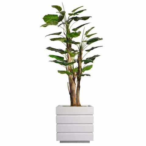 """79.5"""" Tall Scindapsus Aureus Burlap and Fiberstone planter"""