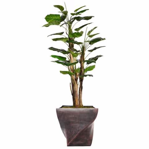 """70.8"""" Tall Scindapsus Aureus,W/Burlap and Fiberstone planter - 71"""""""