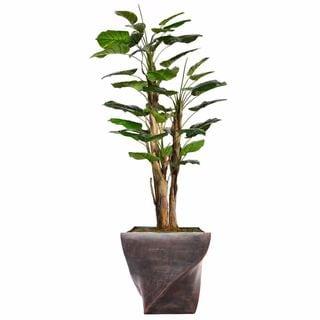 """70.8"""" Tall Scindapsus Aureus,W/Burlap and Fiberstone planter"""