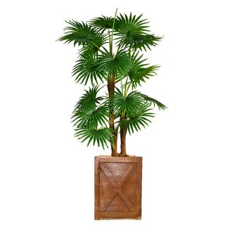 "53.6"" Tall Fan Palm Tree,  Burlap Kit and Fiberstone planter"