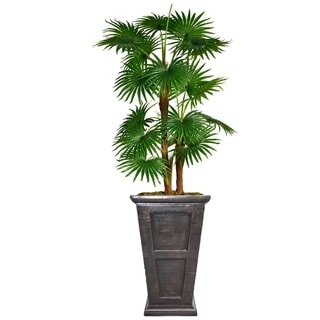 "66.8"" Tall Fan Palm Tree,  Burlap Kit and Fiberstone planter"