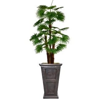 """84.8"""" Tall Fan Palm Tree, Burlap Kit and Fiberstone planter"""