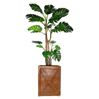 "77.6"" Tall Monstera with Burlap Kit and Fiberstone planter"