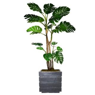 "81.5"" Tall Monstera with Burlap Kit and Fiberstone planter"