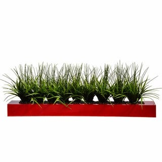 Tall Green Grass in Wood Pot