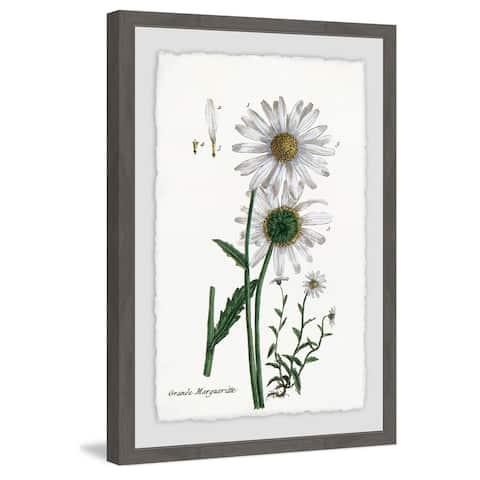 Marmont Hill - Handmade White Daisy III Framed Print