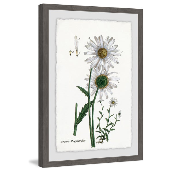 Marmont Hill - Handmade White Daisy III Framed Print. Opens flyout.