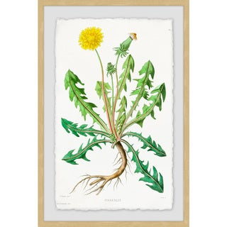 Link to Marmont Hill - Handmade Yellow Dandelion Framed Print Similar Items in Art Prints