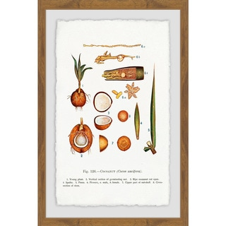 Link to Marmont Hill - Handmade Botanical Coconut Framed Print Similar Items in Art Prints