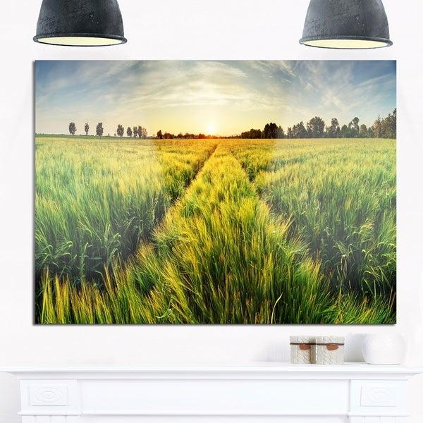 Green Wheat Field at Sunset - Landscape Photo Glossy Metal Wall Art ...