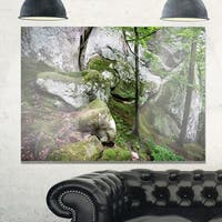 Deep Moss Forest with Rocks - Landscape Glossy Metal Wall Art