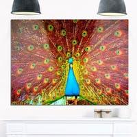 Peacock Dancing - Animal Photography Glossy Metal Wall Art