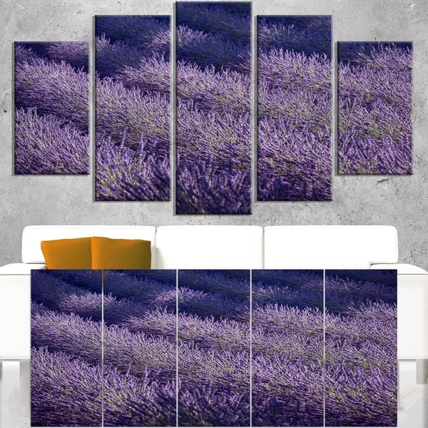Lavender Field and Ray of Light - Oversized Landscape Wall Art Print