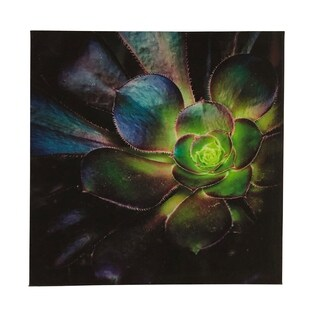 Dark Succulent 14X14 Canvas Art
