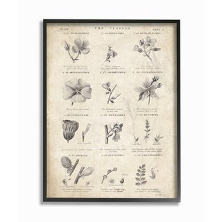 Stupell Industries Conversations On Botany Framed Giclee Wall Art