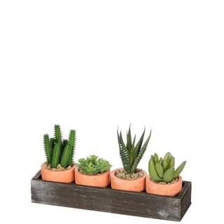 Four Potted Cactus In Tray