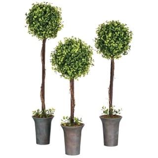 Maiden Hair Fern Topiary Tree