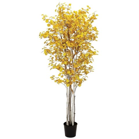 Potted Aspen Tree