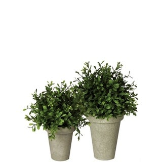 Boxwood Potted Orbs -Set of 2