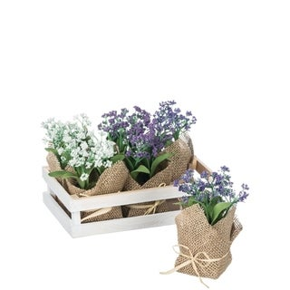 Mini Flowers Tray of 6 Potted Plants