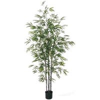 Potted Small Cane Tree