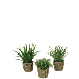 Foliage with Basket Potted Plants - Set of 3