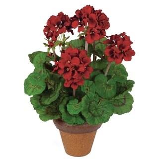 Geranium Potted Plant
